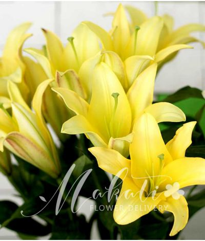 1 dozen of yellow lilies