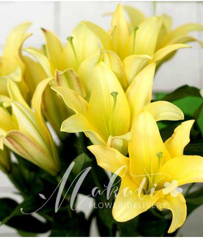 1 dozen of yellow lilies